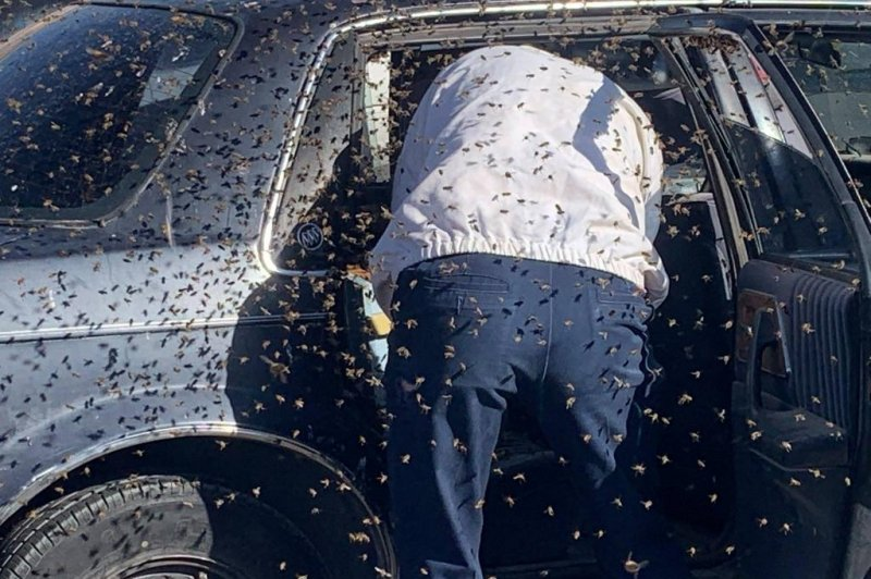 Off-duty firefighter removes 15,000 bees from car in grocery parking lot